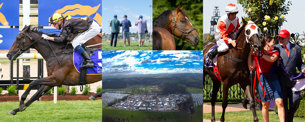 Outstanding Tasmanian Yearling Catalogue Now Online