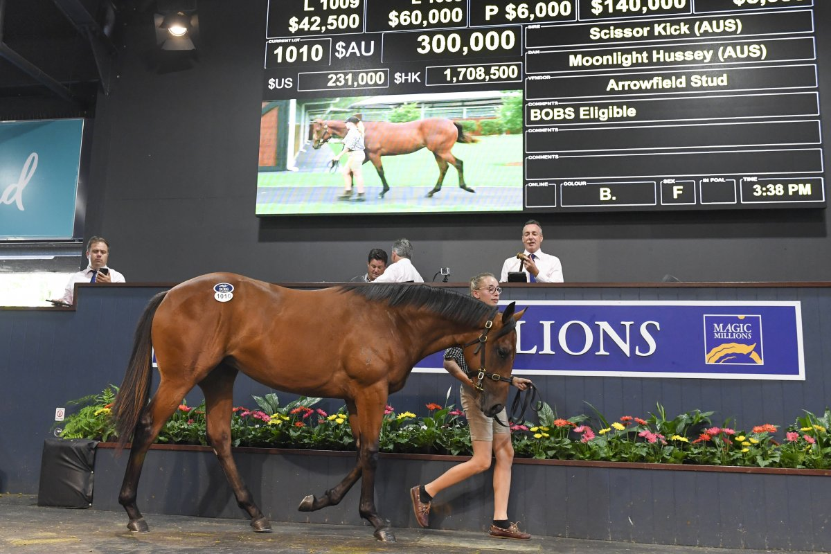 Scissor Kick Filly Tops Day Six on the Gold Coast