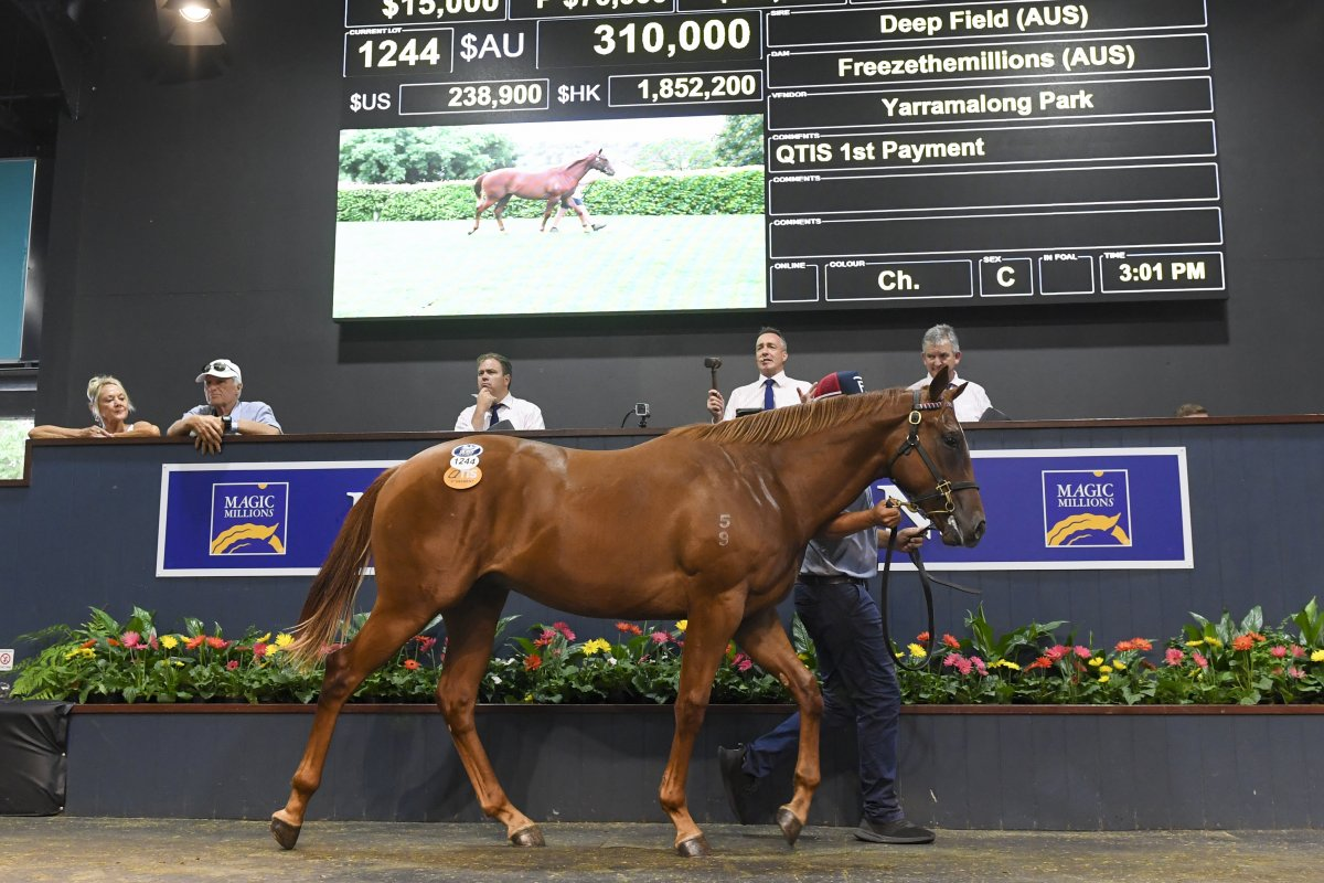 Records Smashed at Greatest Ever Gold Coast Yearling Sale