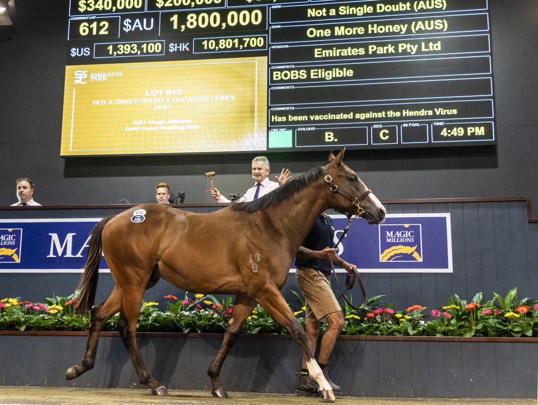 Not a Single Doubt Colt Tops Day Three on Gold Coast