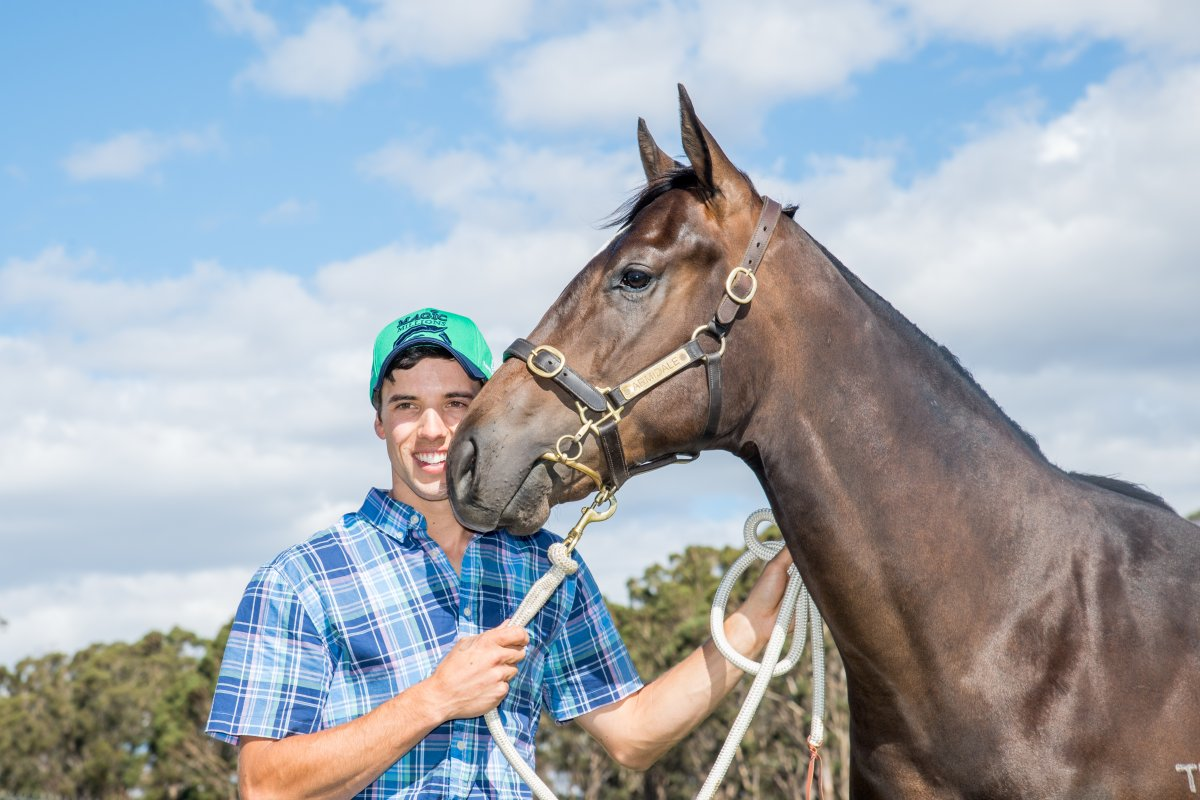 Impending Colt Tops Record Breaking Tassie Yearling Sale