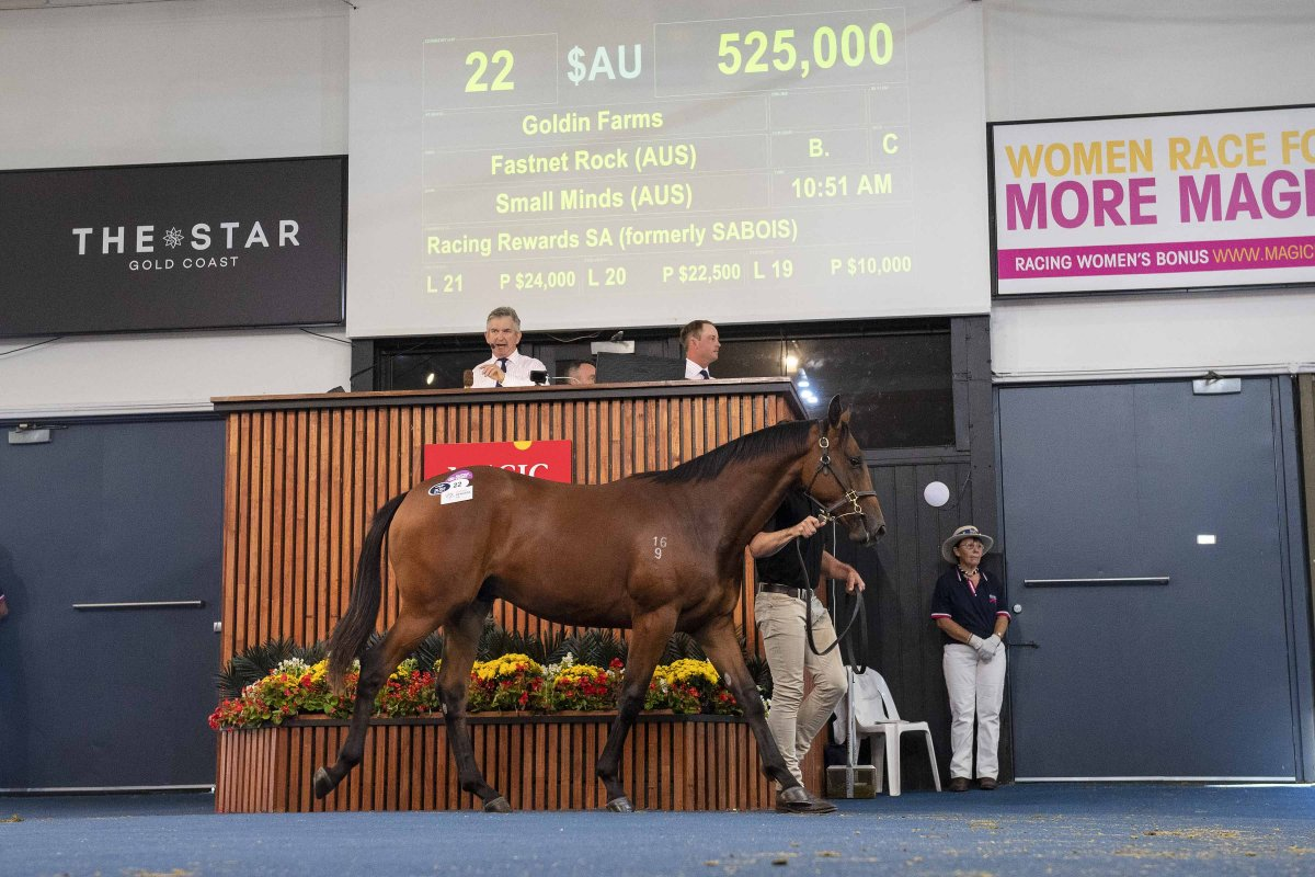 Records Smashed on Day One of Adelaide Yearling Sale