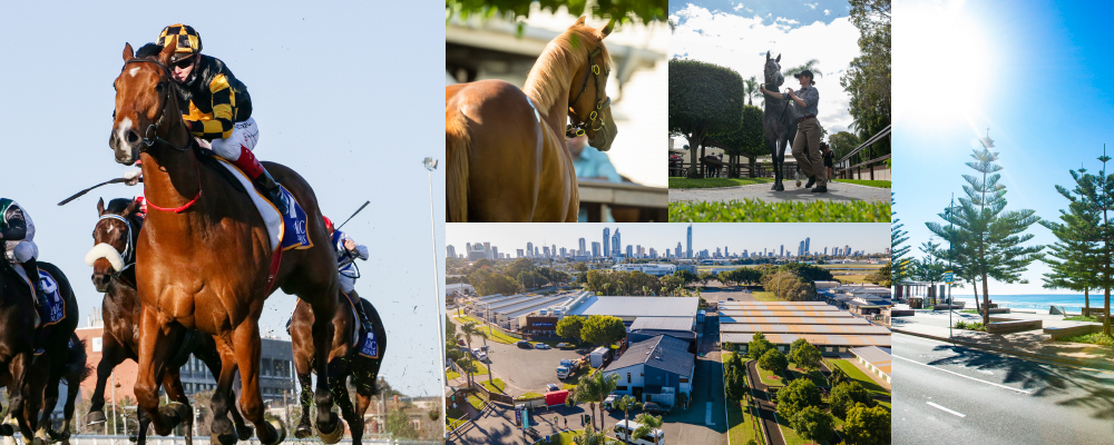 Quality National Yearling Catalogue Now Online