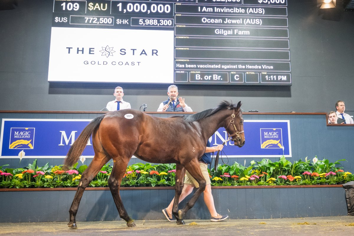Invincible Colt Sells for $1 million at National Weanling Sale