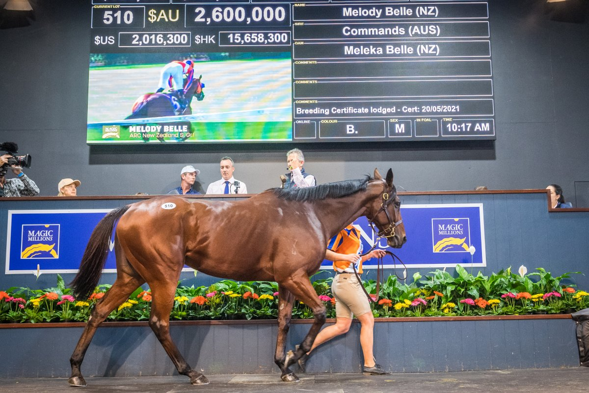 Records Shattered on Day One of National Broodmare Sale