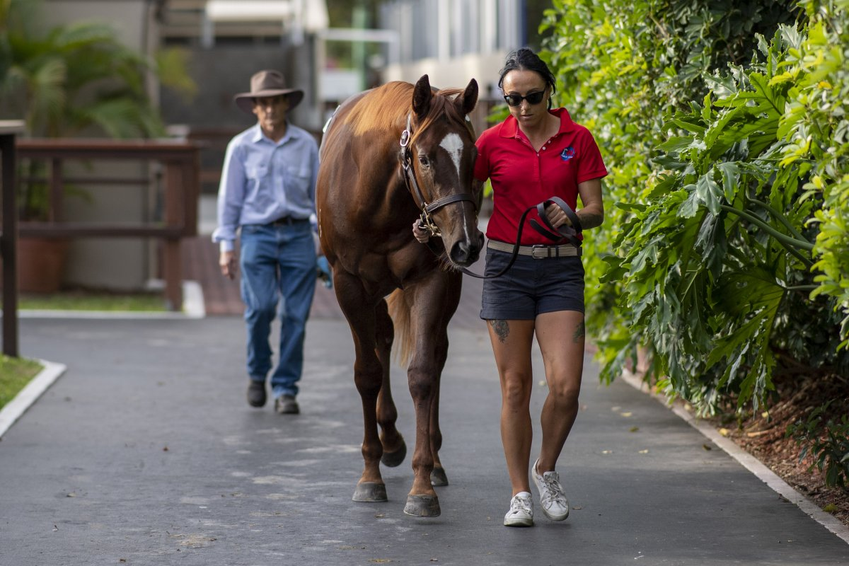 Capitalist Filly Tops Day Two of National Yearling Sale