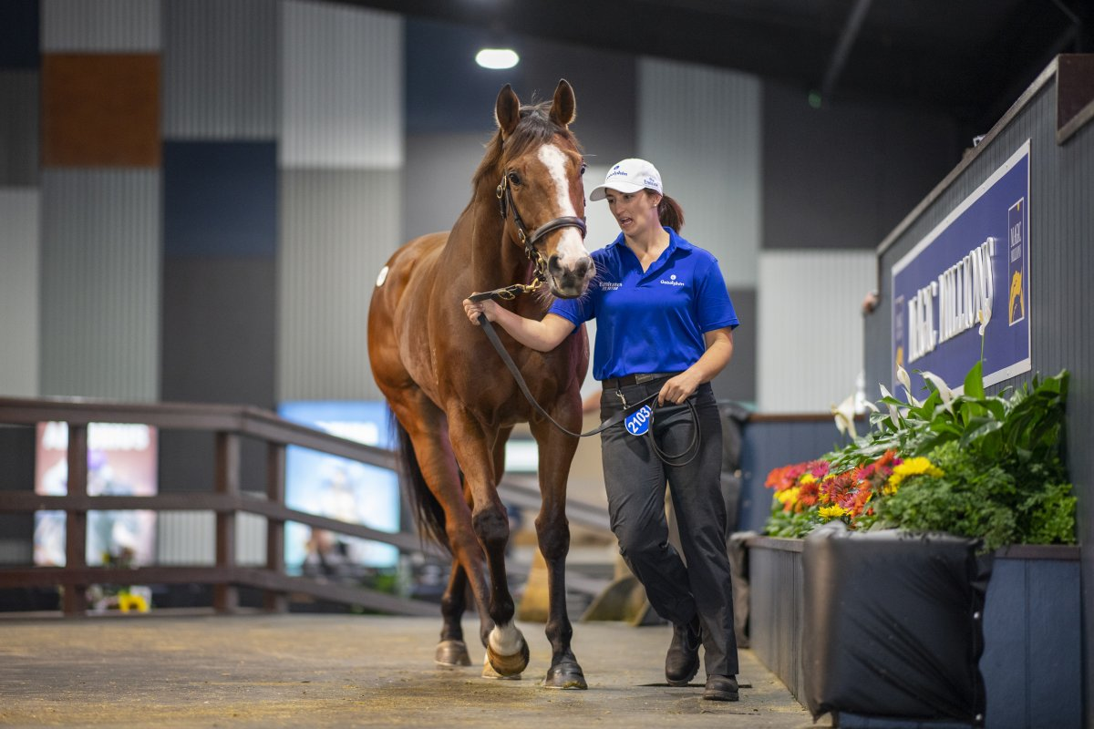 Records Smashed at Greatest Ever National Sale
