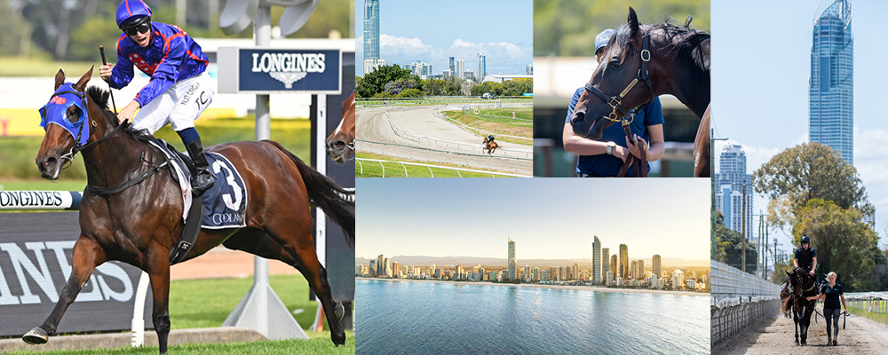 Leading 2YO Sale to Deliver More Stars on Gold Coast